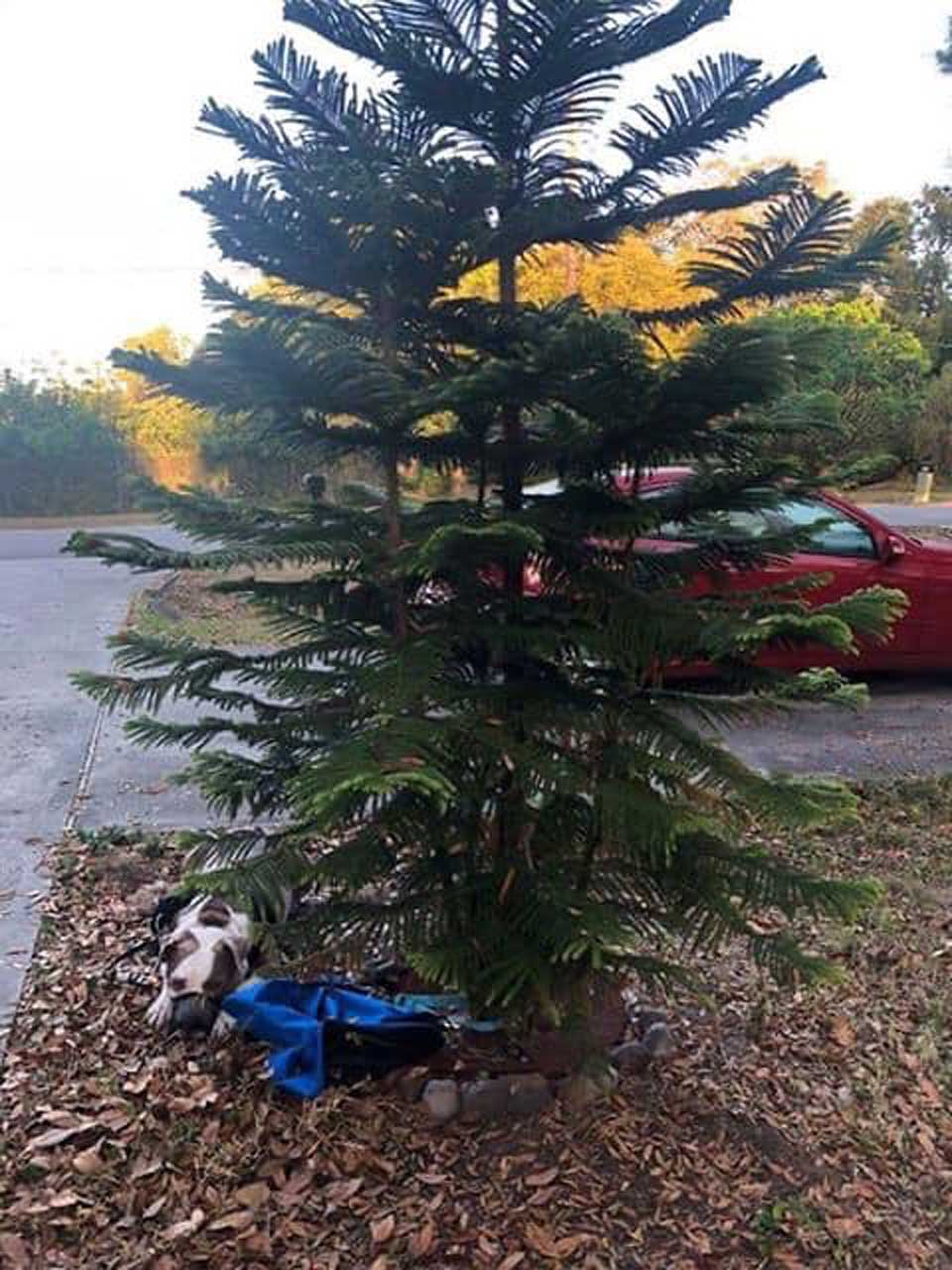 Perrito abandonado cerca a árbol
