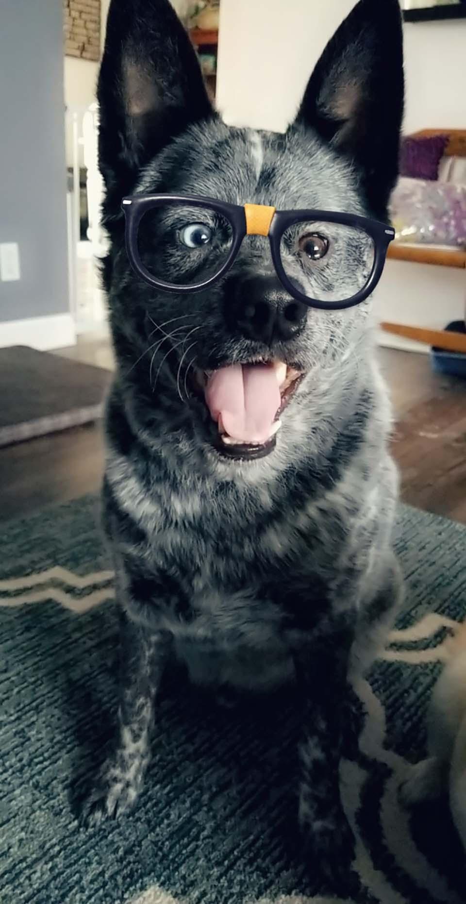 Perrito con gafas