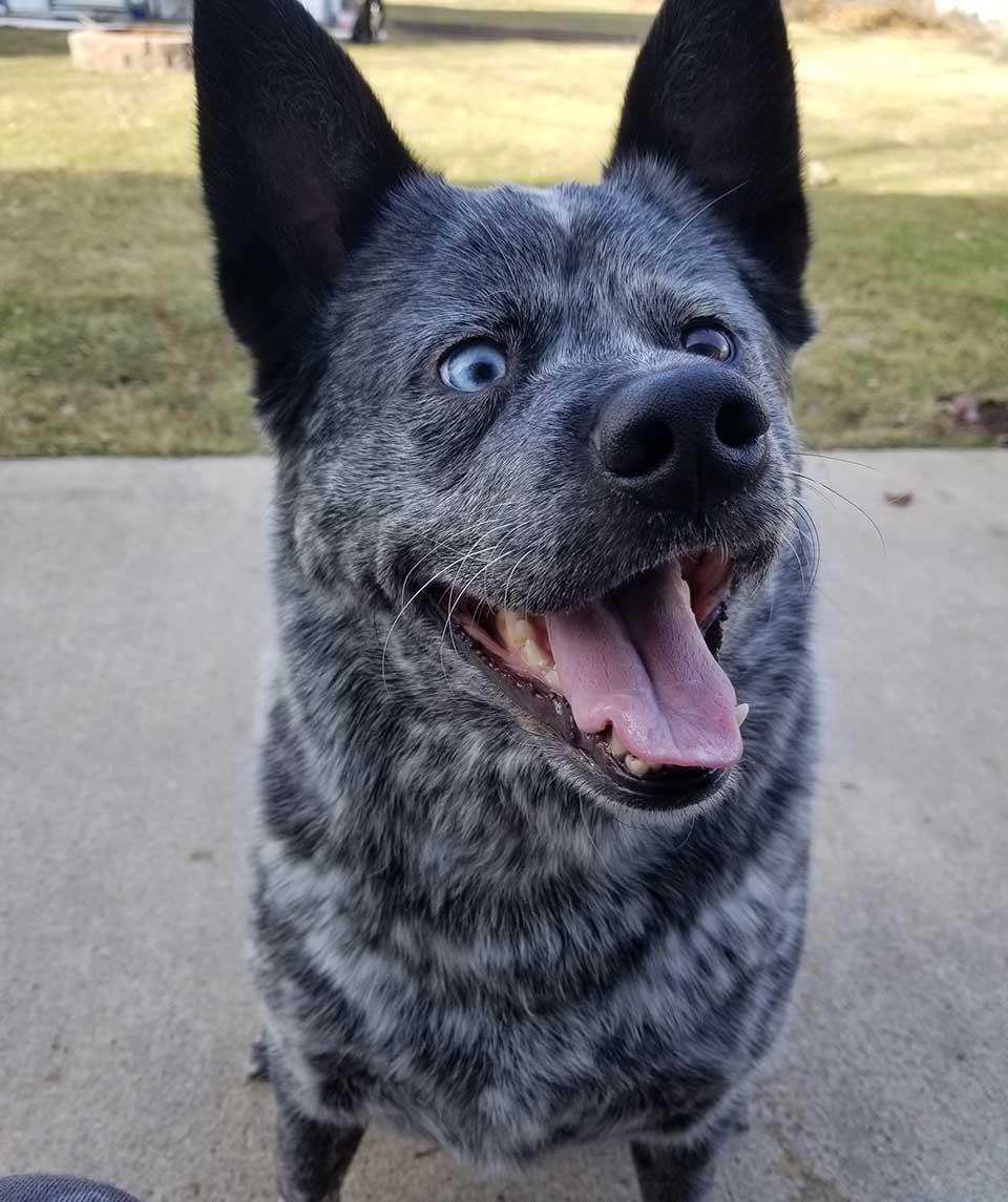 Perrito es feliz milagrosamente