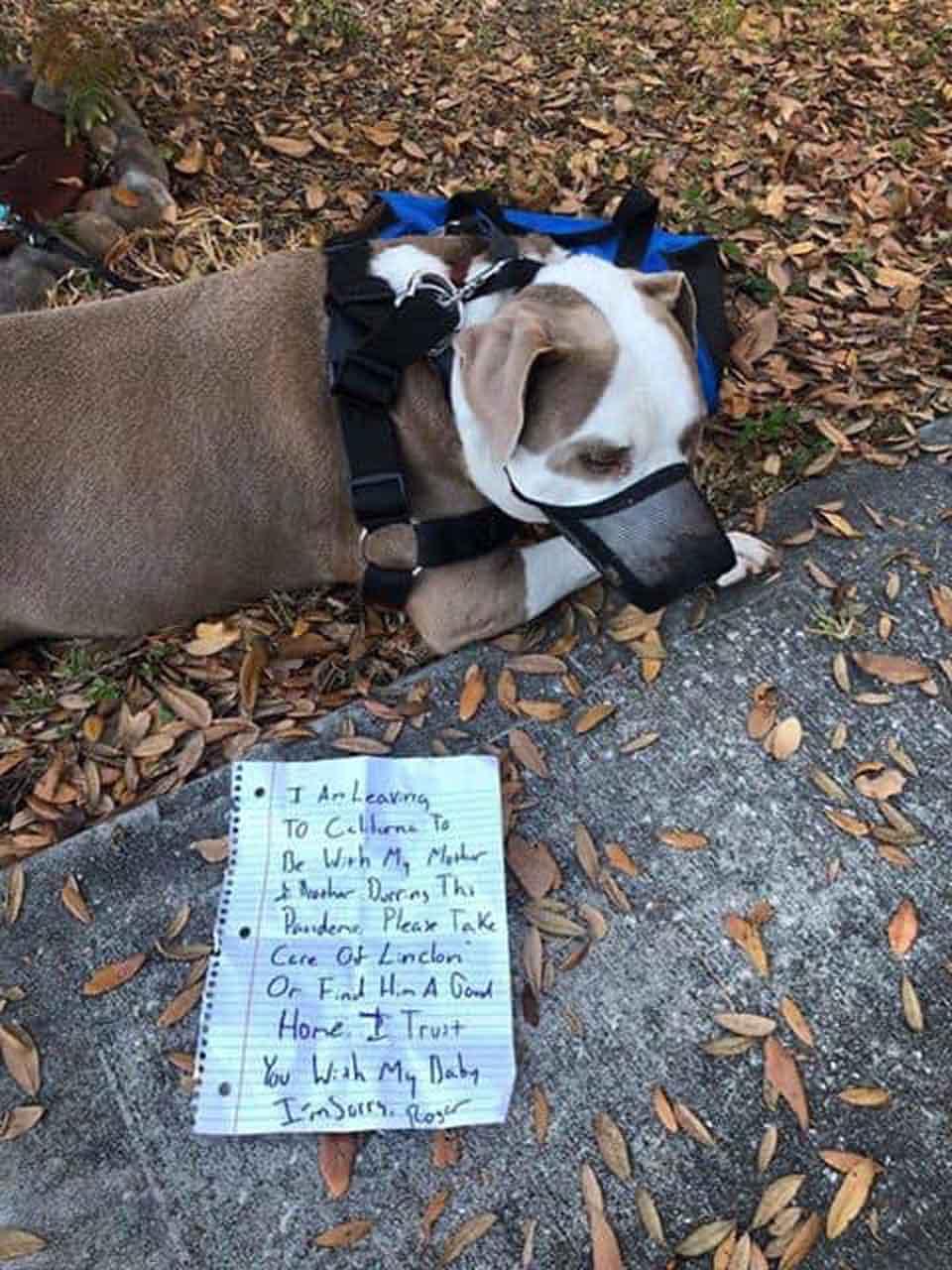 Perrito fue abandonado junto a una nota
