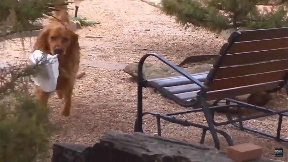 Perrito lleva encargo a mujer en cuarentena