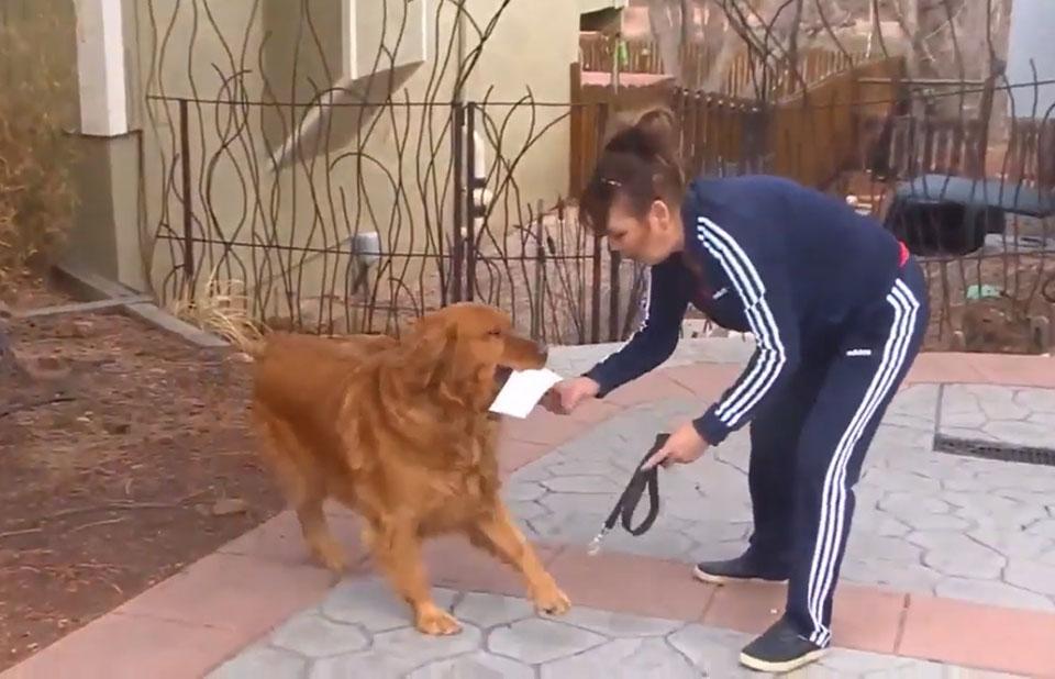 Perrito lleva listado de provisiones para comprar