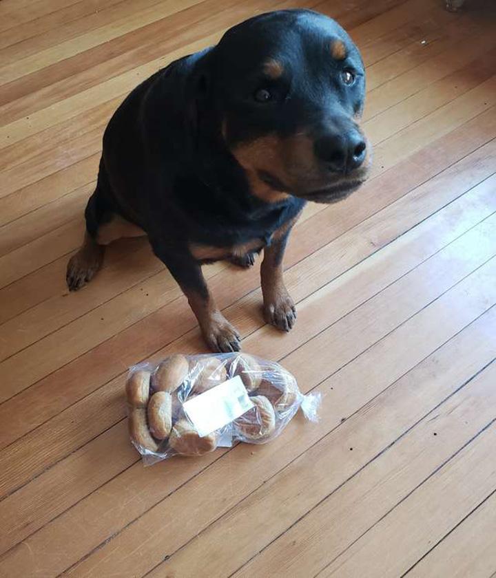 Perro cuida el pan