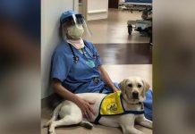 Perro de terapia ayuda a animar al personal médico cansado y estresado