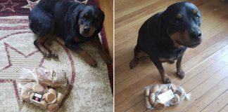 Perro protege y guarda el pan cuando su familia abandona la casa