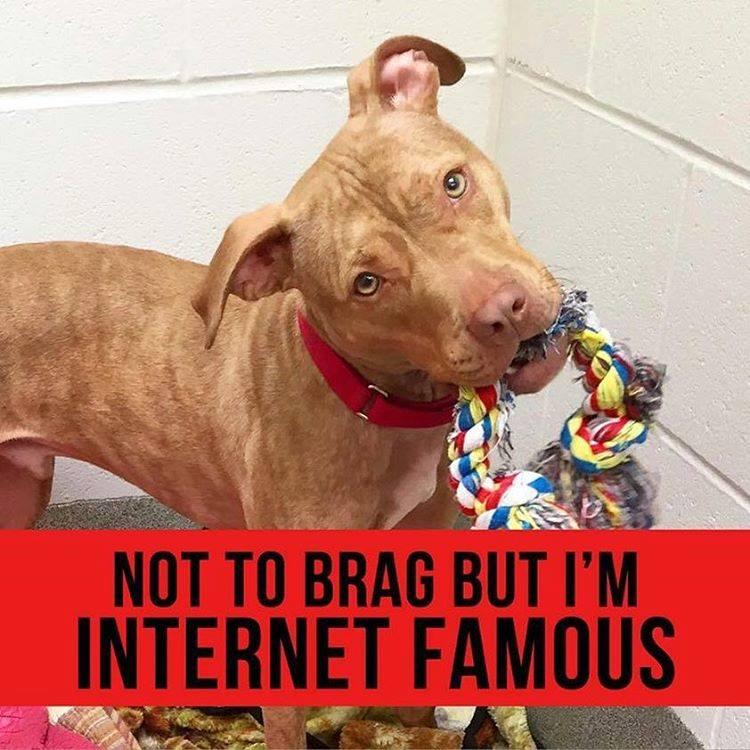 Perro sin hogar famoso