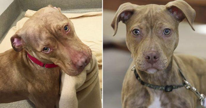 Perro sin hogar tiende su cama con la esperanza en que lo adopten