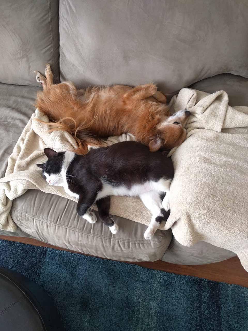 Perro y gato duermen juntos en sofá
