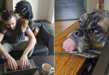 Personas comparten como lidian con sus mascotas trabajando desde casa