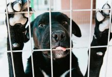 Refugio animal encuentra un hogar para todos los animales en adopción