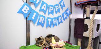 Refugio animal organizó una fiesta para un gato, pero nadie asistió
