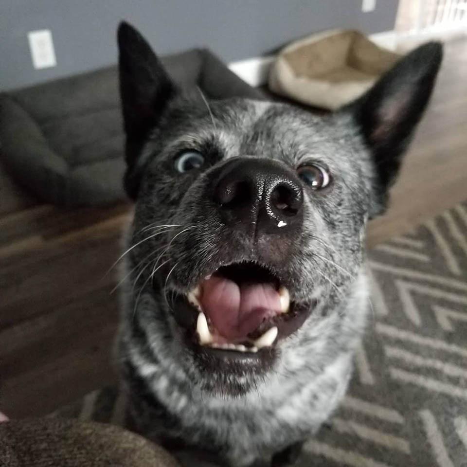 Rostro de adorable perrito