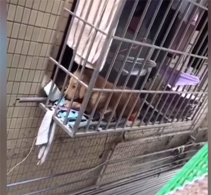 Vecina alimenta perro