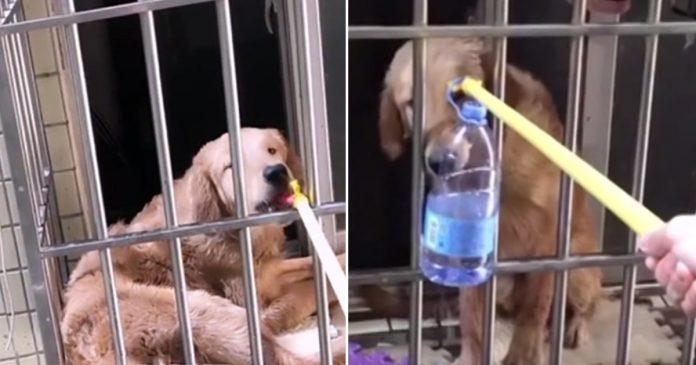 Vecina salvó a un perro abandonado al alimentarlo por la ventana