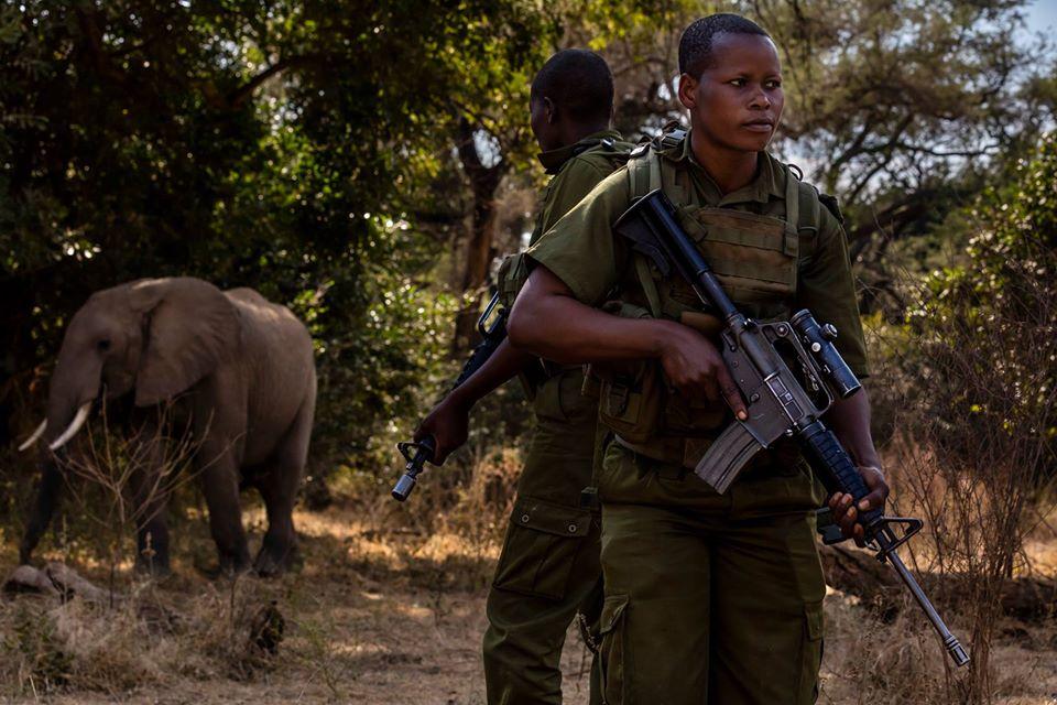 Valientes mujeres protegen elefantes