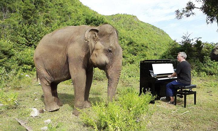 elefante ciego escucha el piano