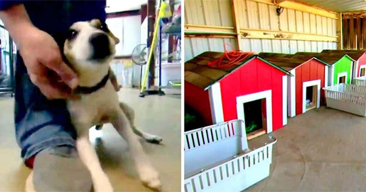 niños construyen casas para perros en clase y las donan en refugios.