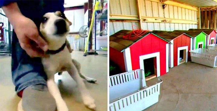 niños llevan casitas a perros sin hogar