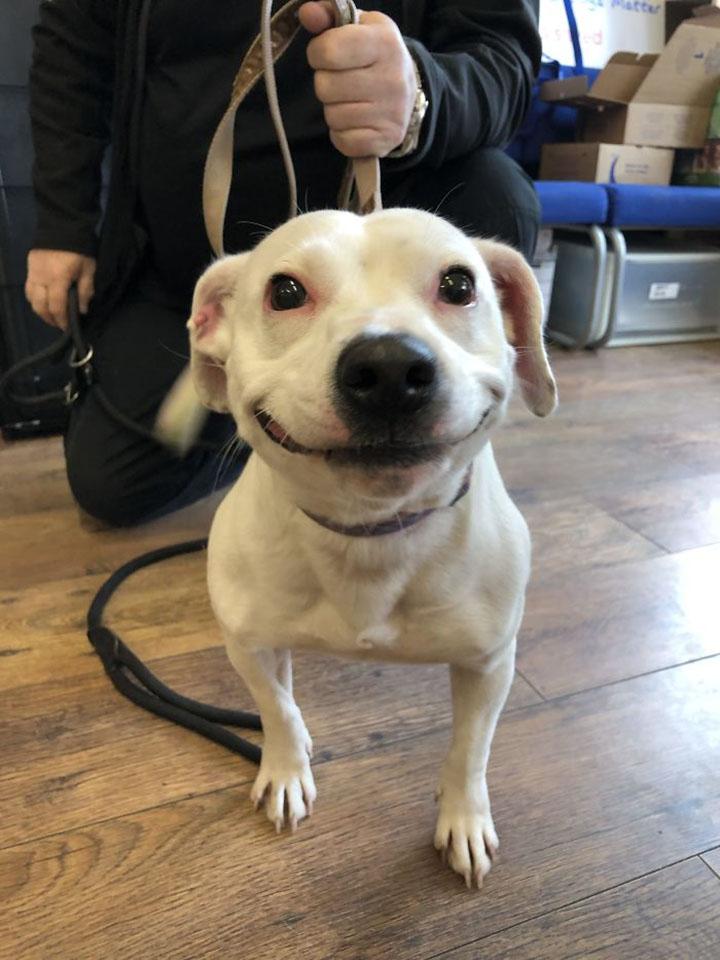 Perro con fabulosa sonrisa