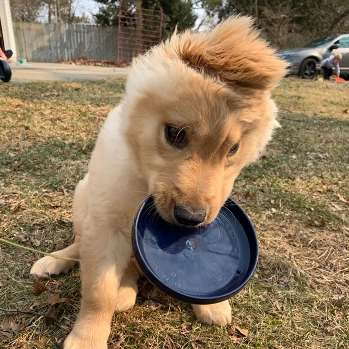 perrito con oreja en su cabeza jugando