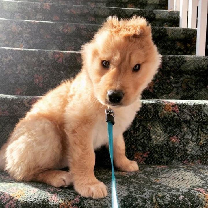 perrito unicornio en las escaleras de casa