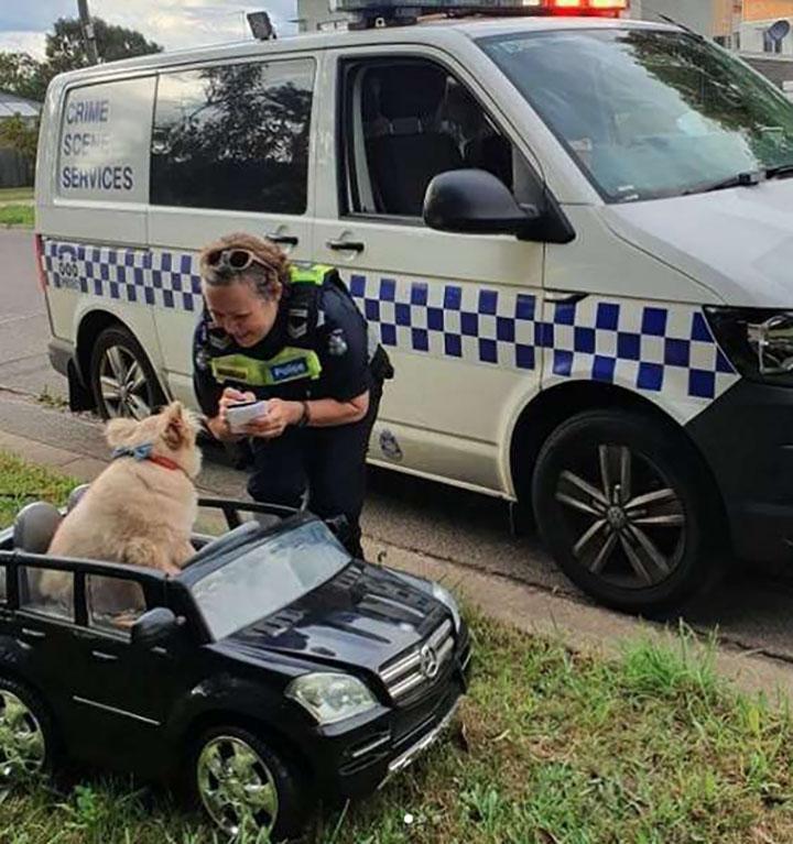 perro detenido manejando su auto