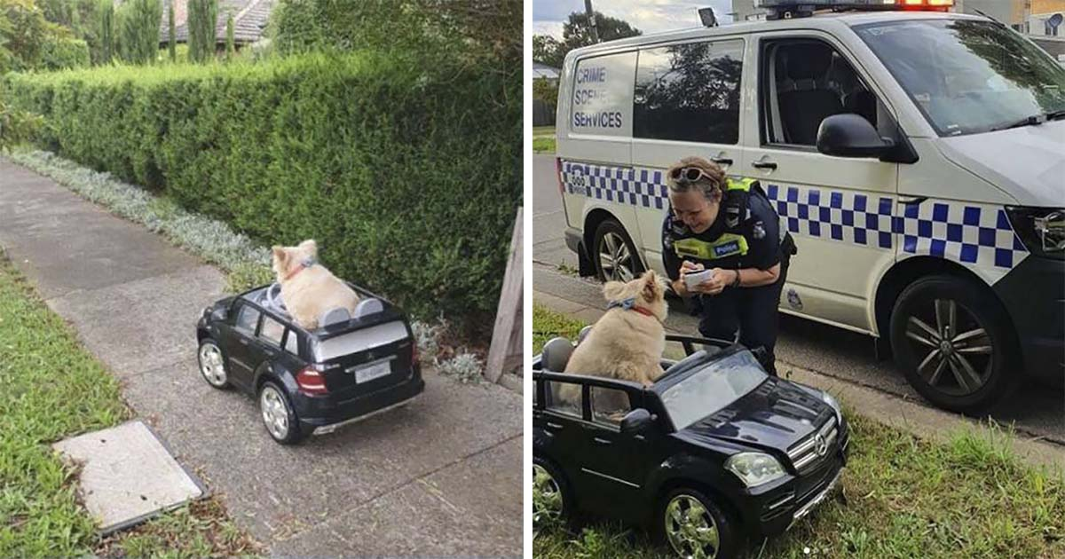 perro detenido por la policía conduciendo pequeño auto.