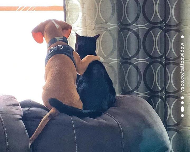 perro y gato se abrazan mientras ven las aves
