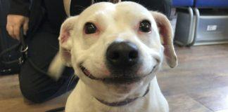 Perro encontró hogar gracias a su fabulosa sonrisa