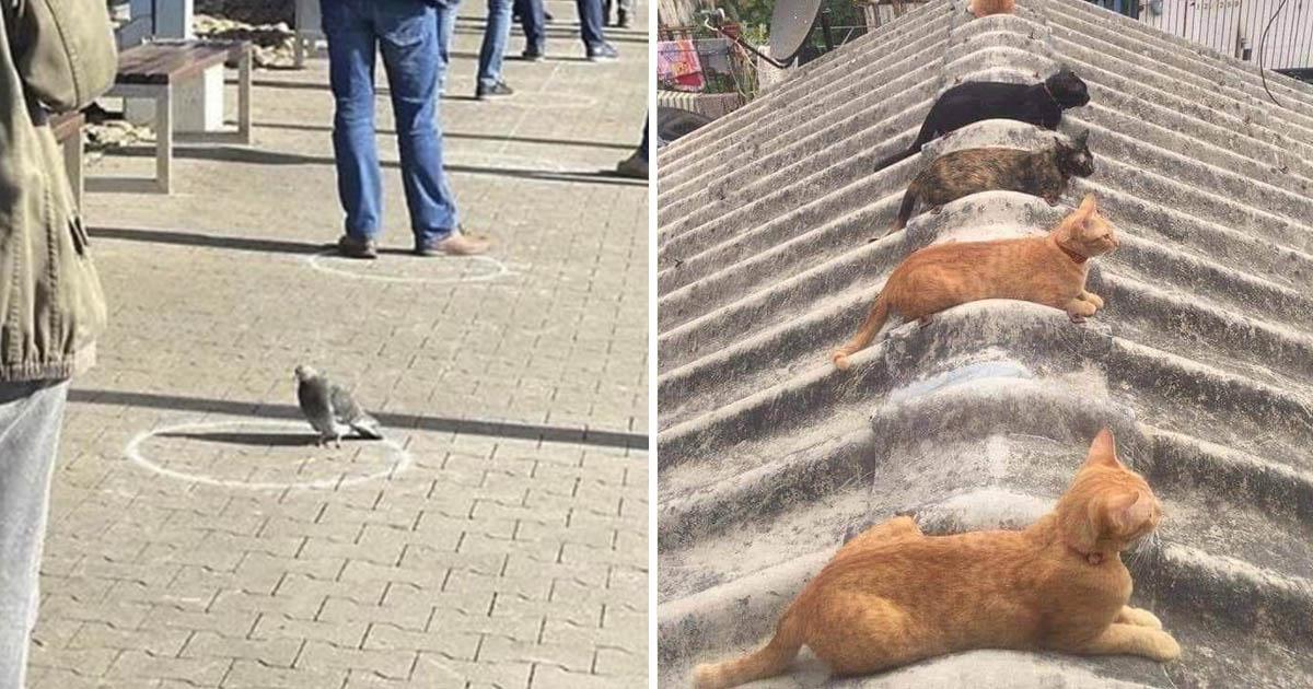 Animales practican el distanciamiento social