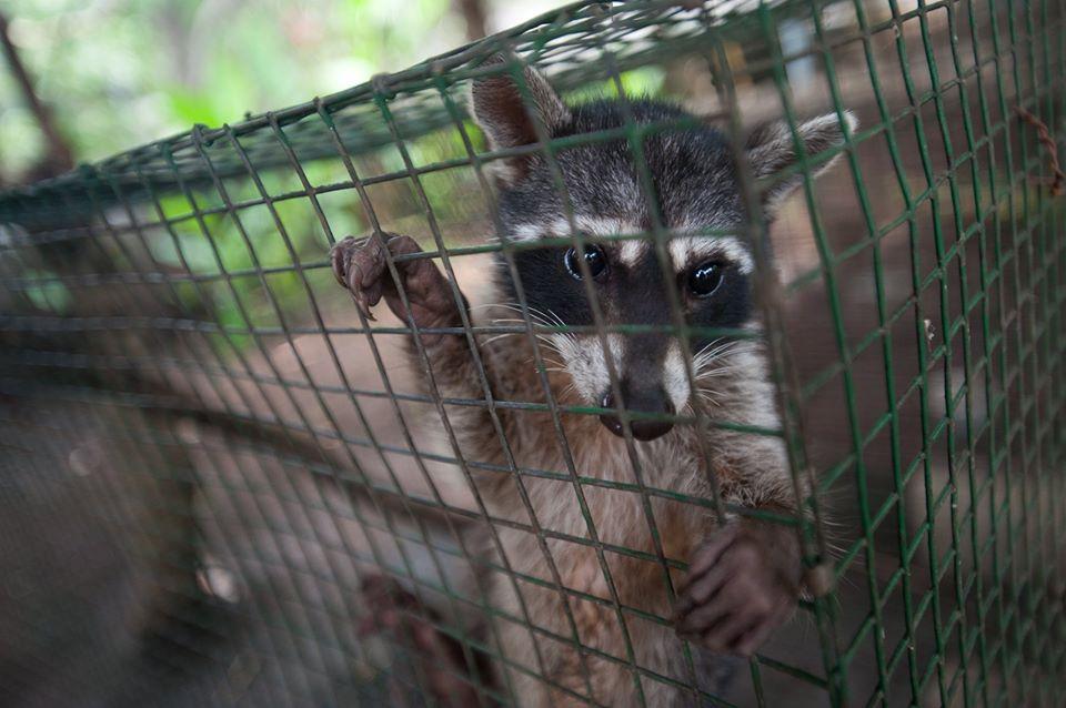 Animales salvajes vendidos en indonesia