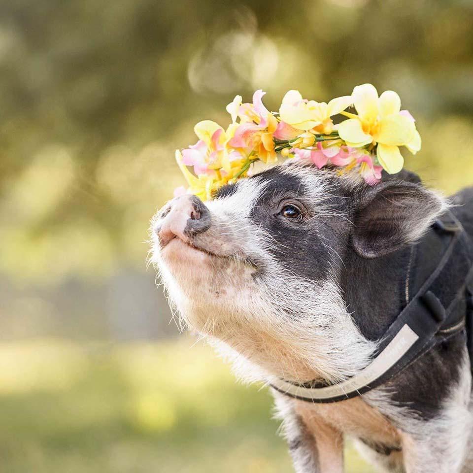Cerdita con flores en la cabeza