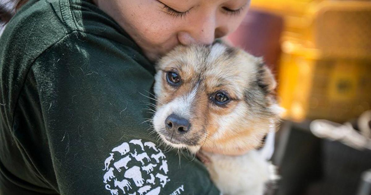 China reclasifica a los perros como mascotas y en lugar de ganado