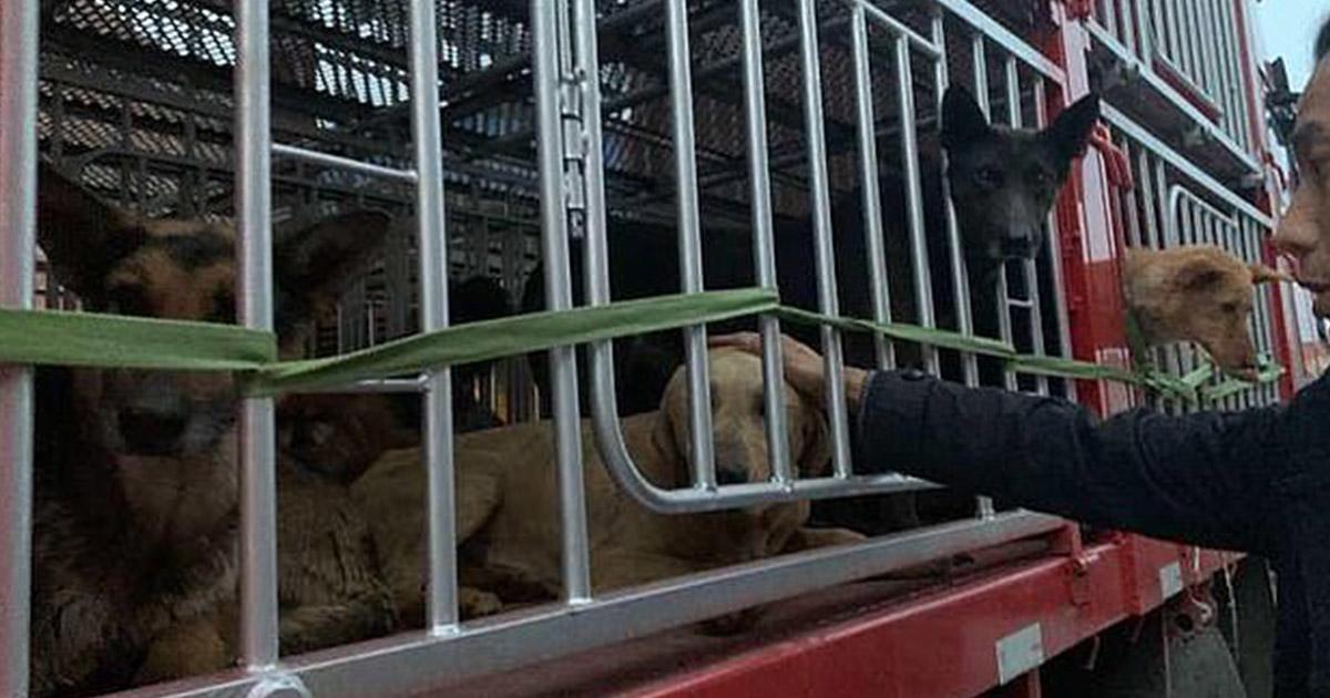 Cientos de perros fueron rescatados de un matadero ilegal en china