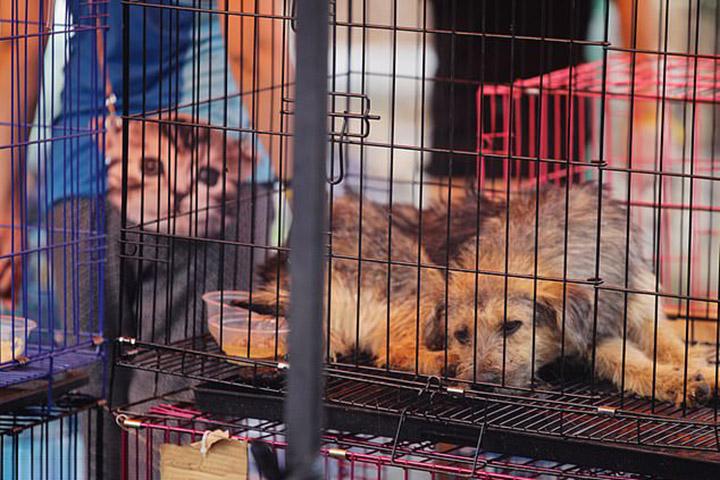 Ciudad china prohíbe consumo de perros y gatos