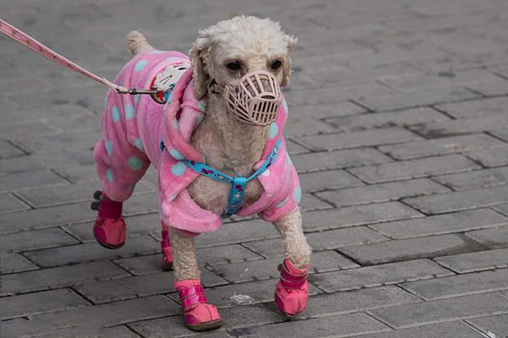 Ciudad china prohíbe consumo de perros