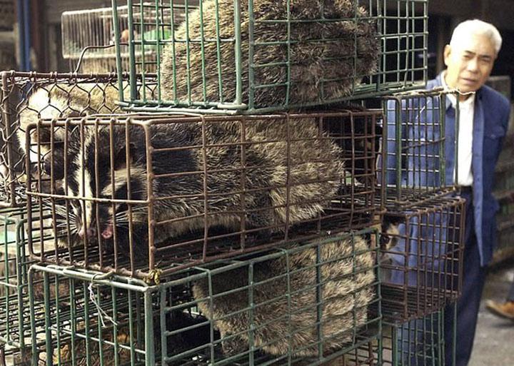 Ciudad china Beijing prohíbe el comercio de animales salvajes