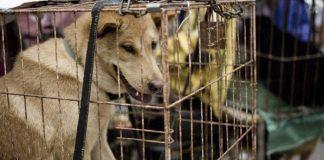 Ciudad china prohibió el consumo de perros y gatos con una nueva ley