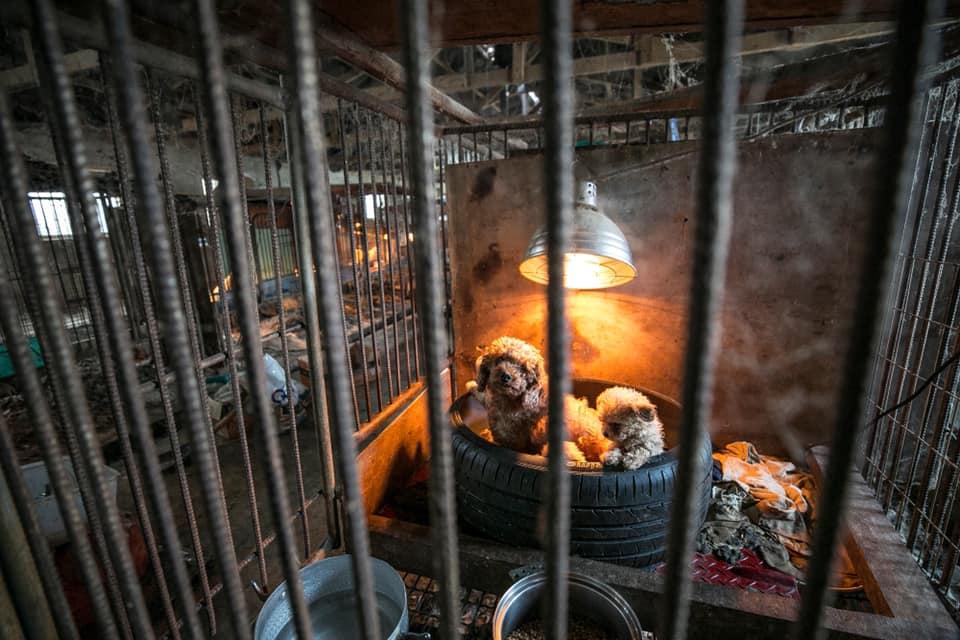 Consumo de perros prohibido