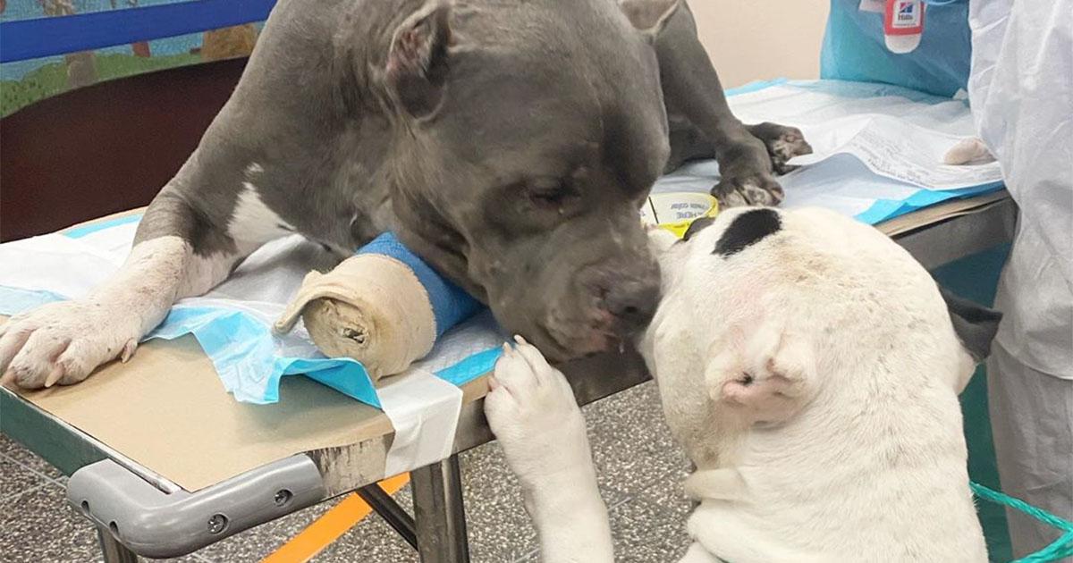 Dos perros se consuelan después de perder a su dueño