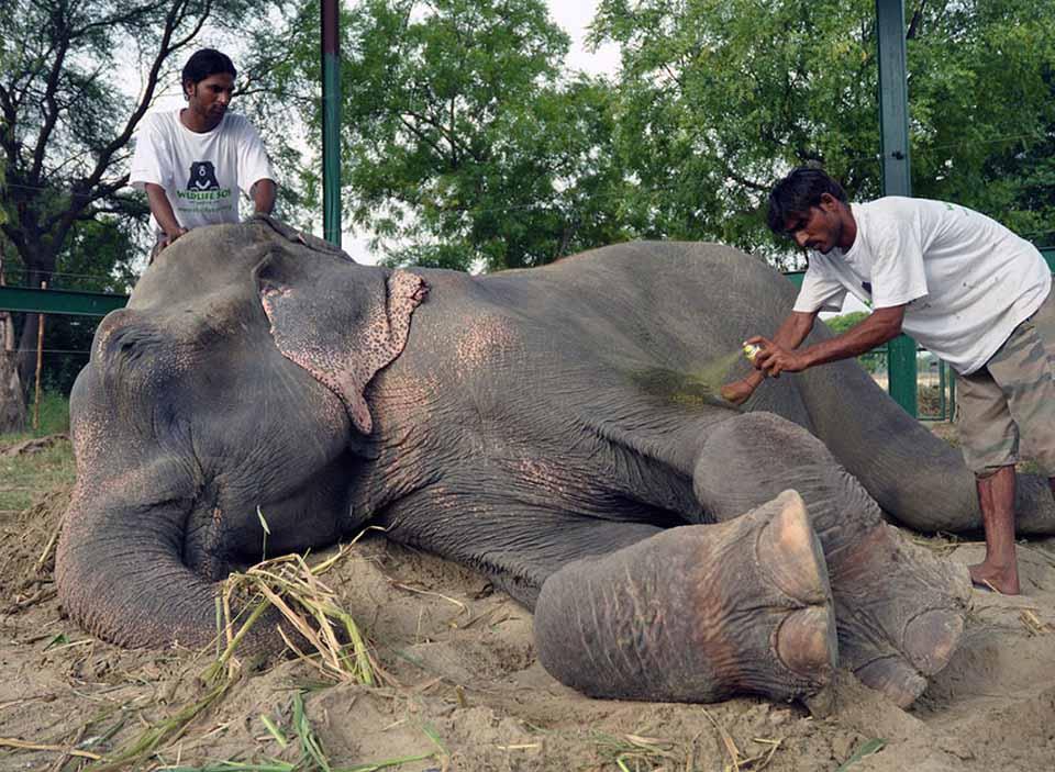 Elefante rescatado recibe cuidados