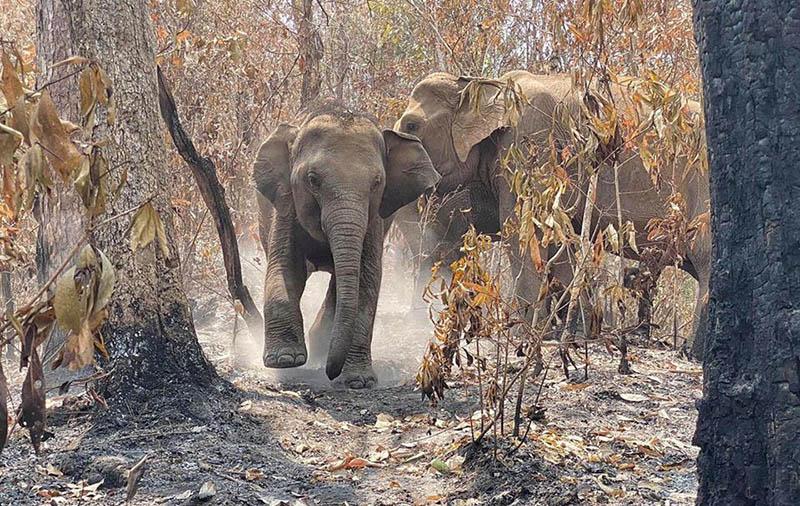 Elefantes disfrutando en Tailandia
