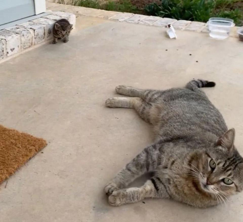 Familia de gatitas