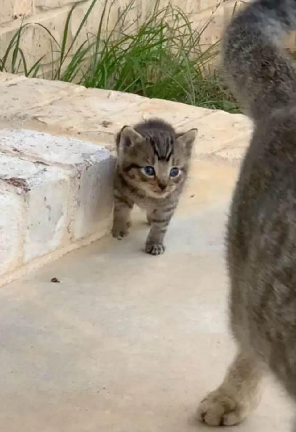 Gata detrás de su mamá