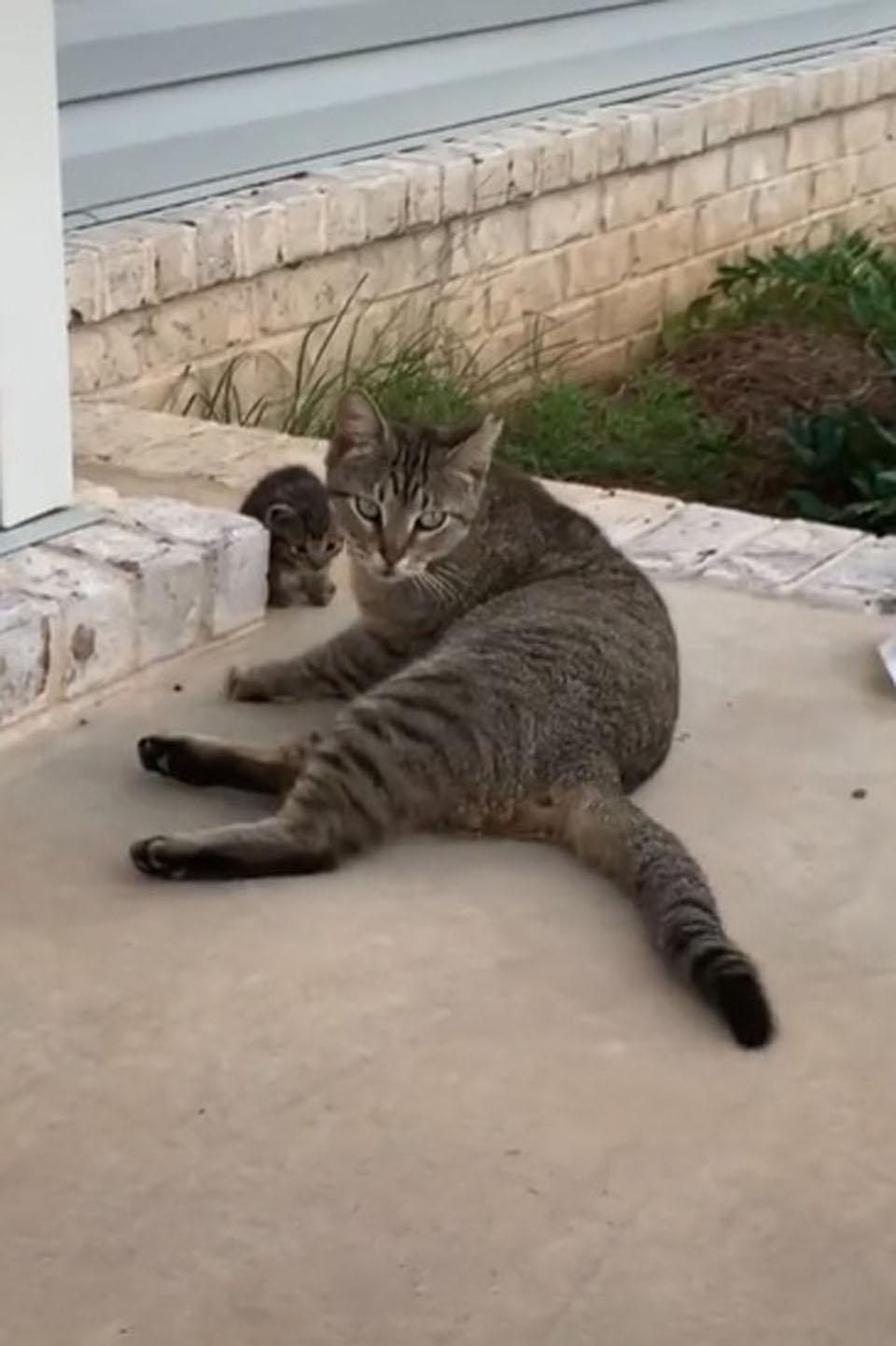 Gata sin hogar trae a su pequeña gata