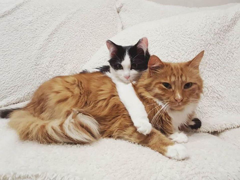 Gatita pequeña abraza a gato grande