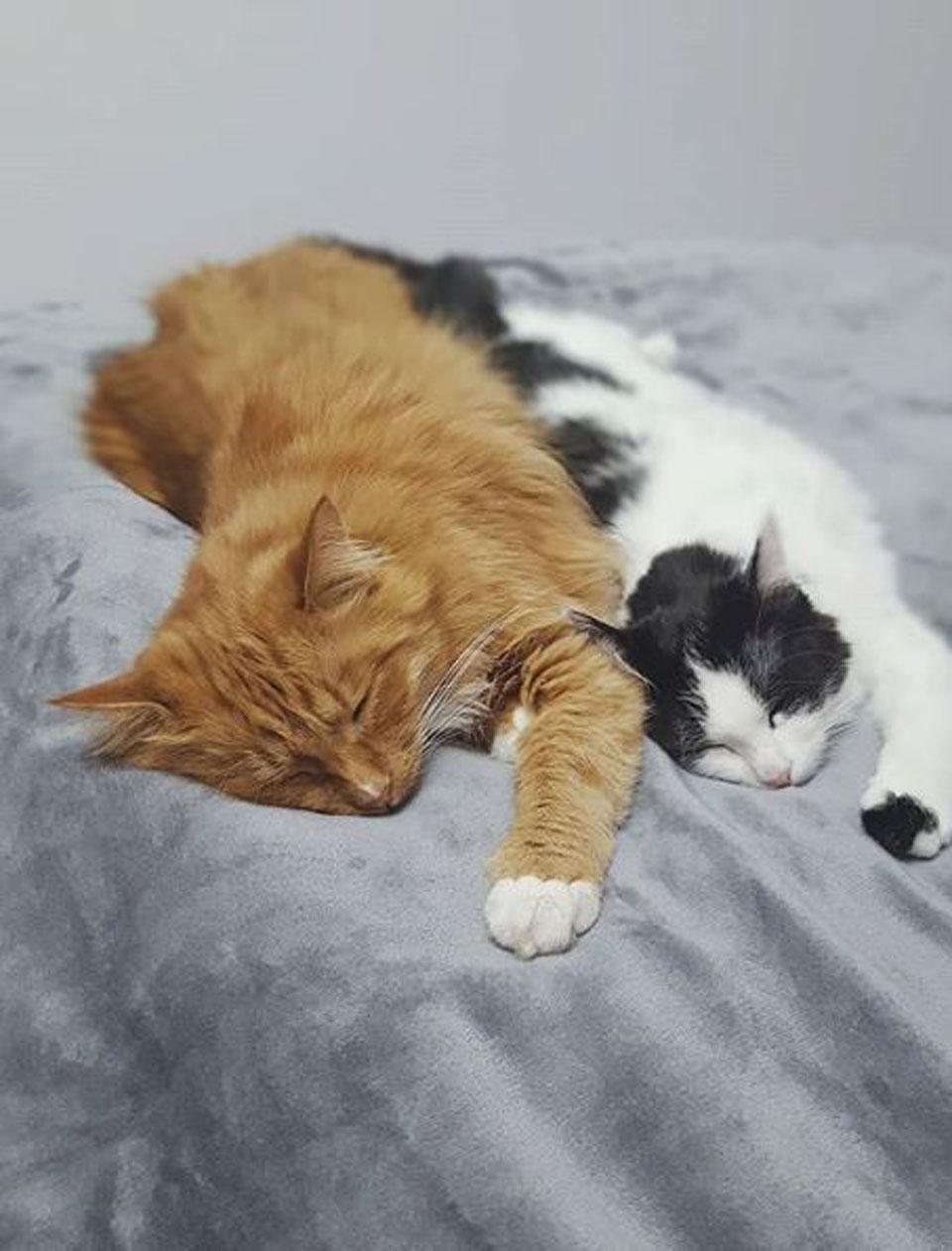 Gatita y gato duermen acompañados