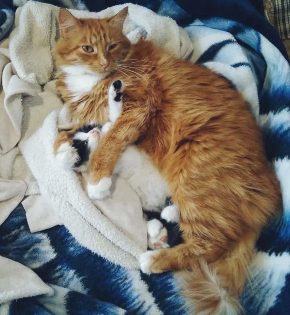Gato cuida a gatita