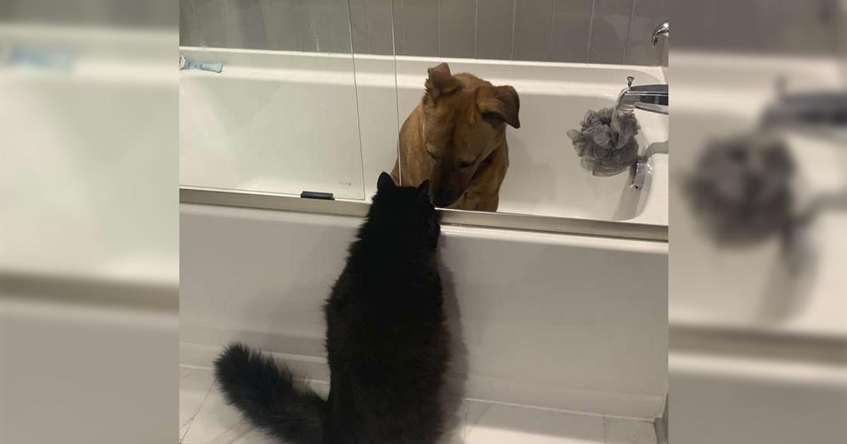 Gato cuida de su mejor amiga perrita durante la tormenta