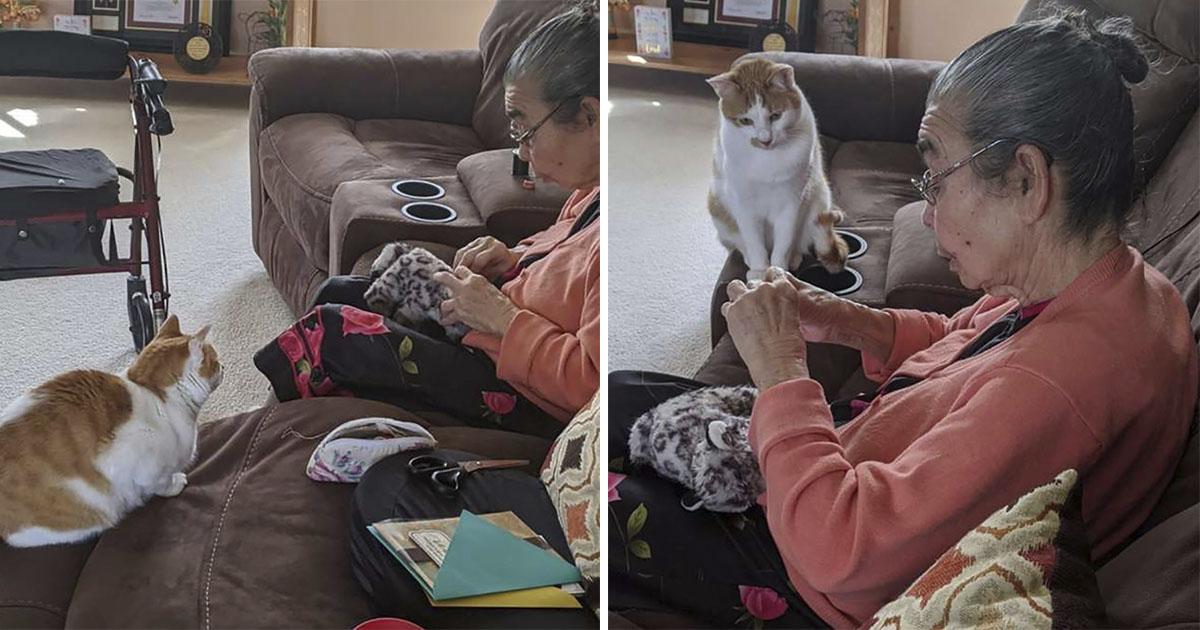 Gato esperó que la abuela reparara su juguete